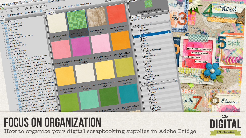 Focus on Organization using Adobe Bridge